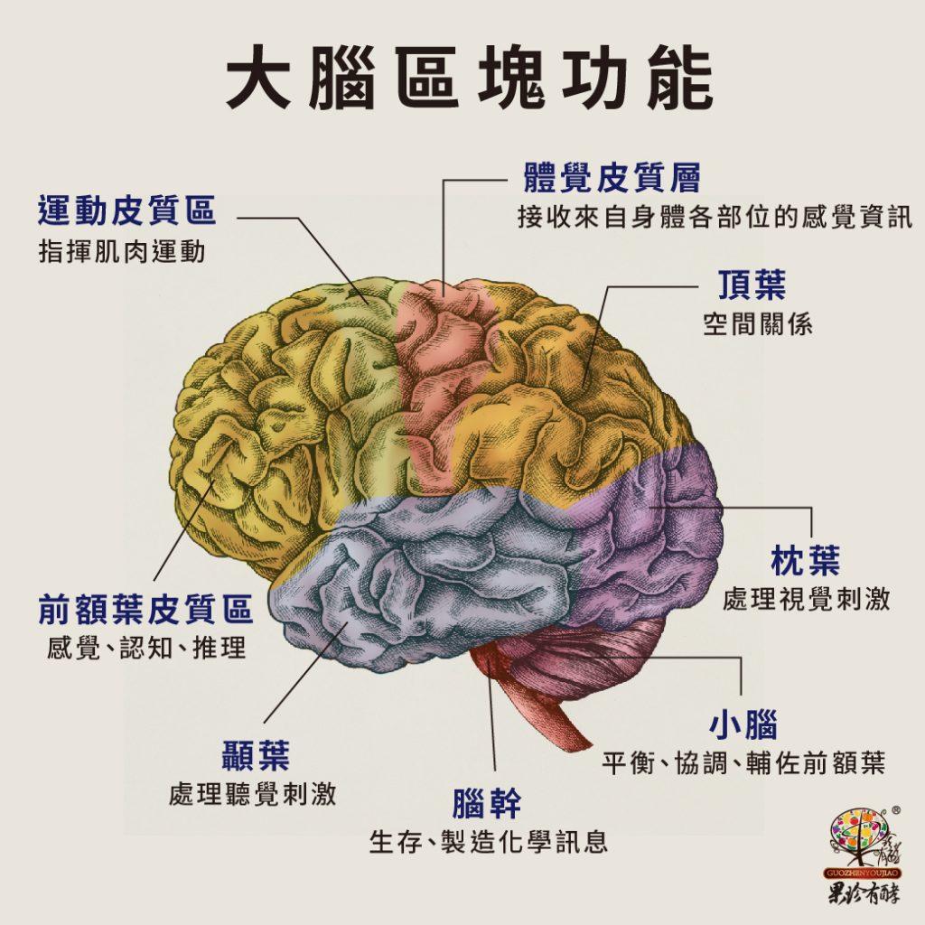 大腦區塊功能