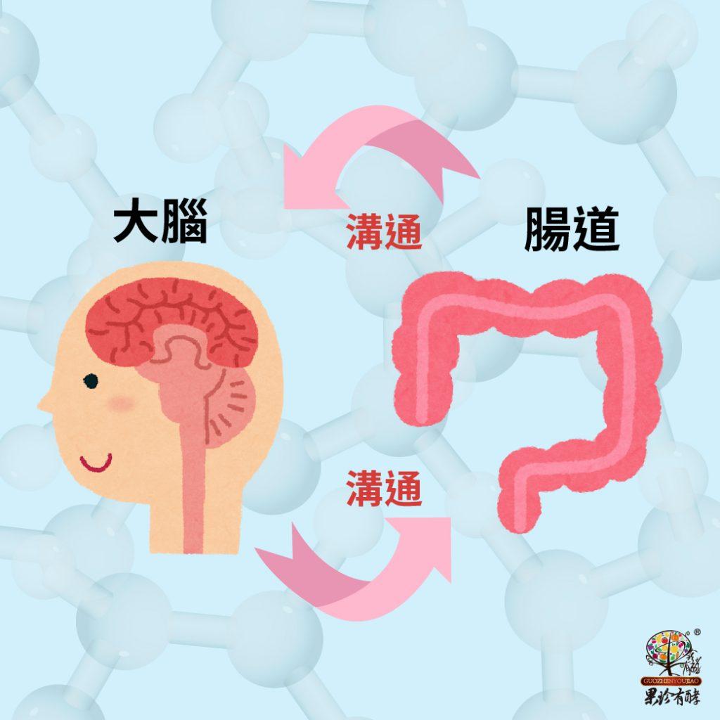 大腦與腸道的溝通