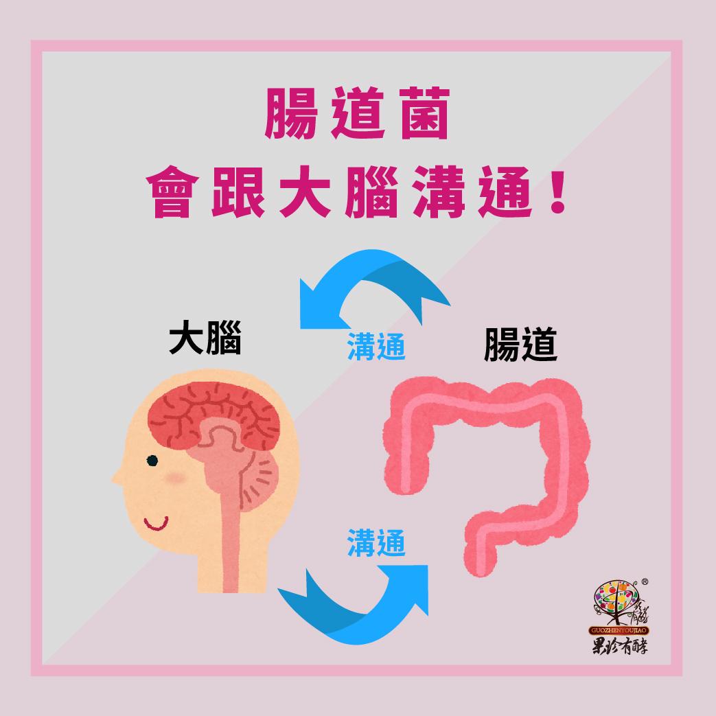 腸道菌與大腦