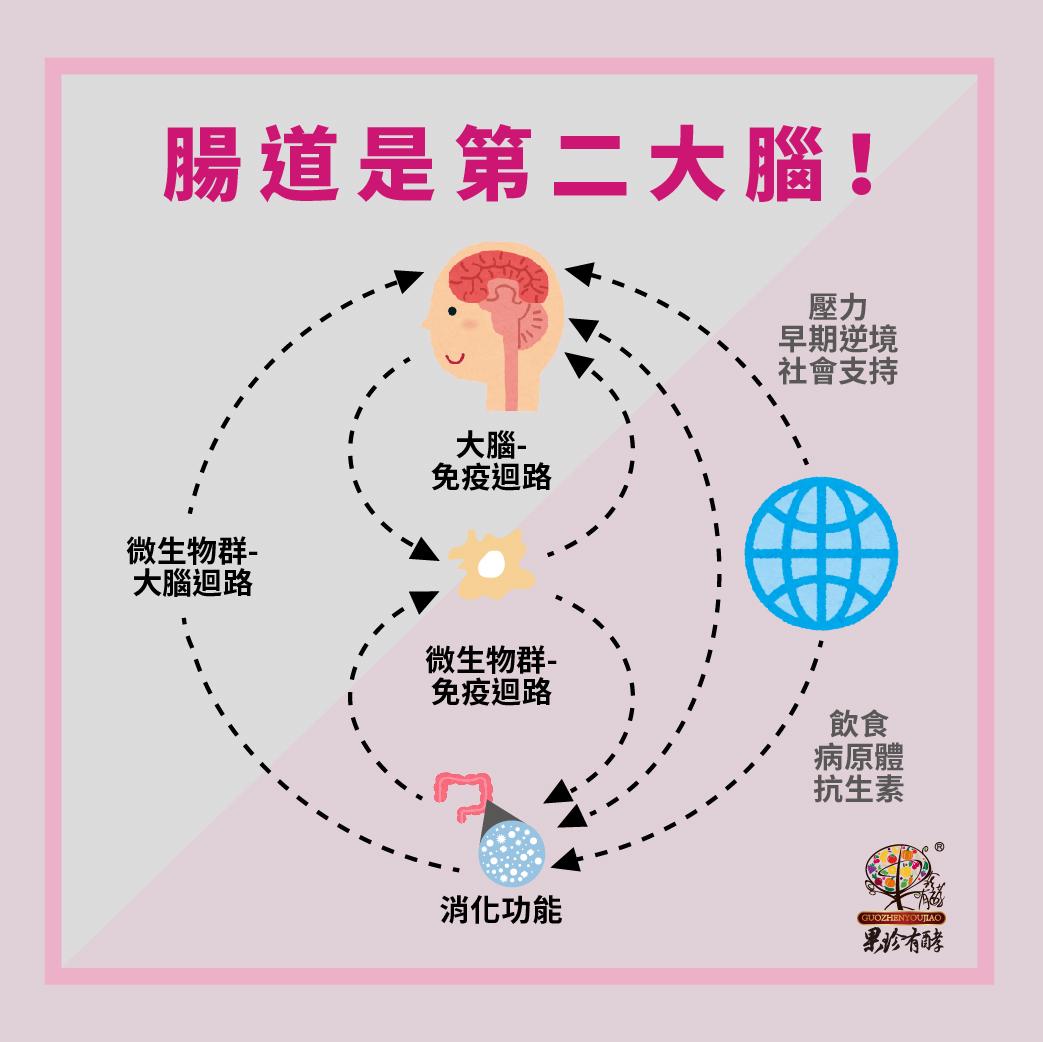 腸道是第二大腦 — 腸道菌會跟大腦溝通!Ⅱ