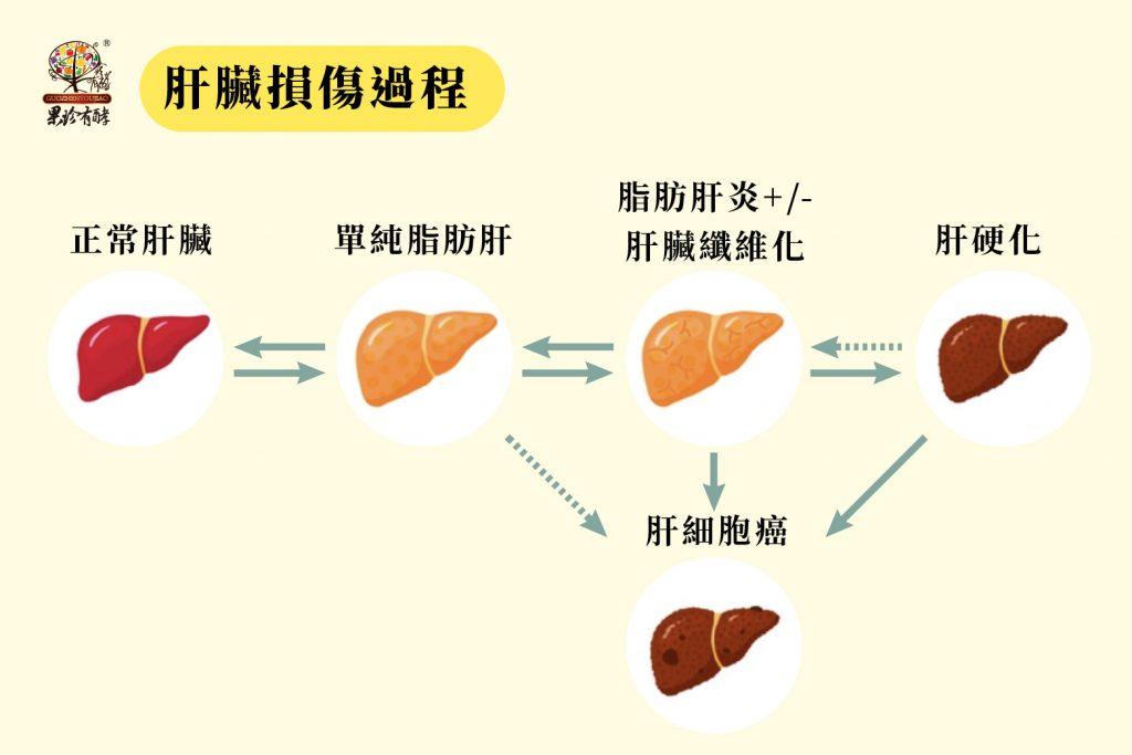 肝臟損傷過程