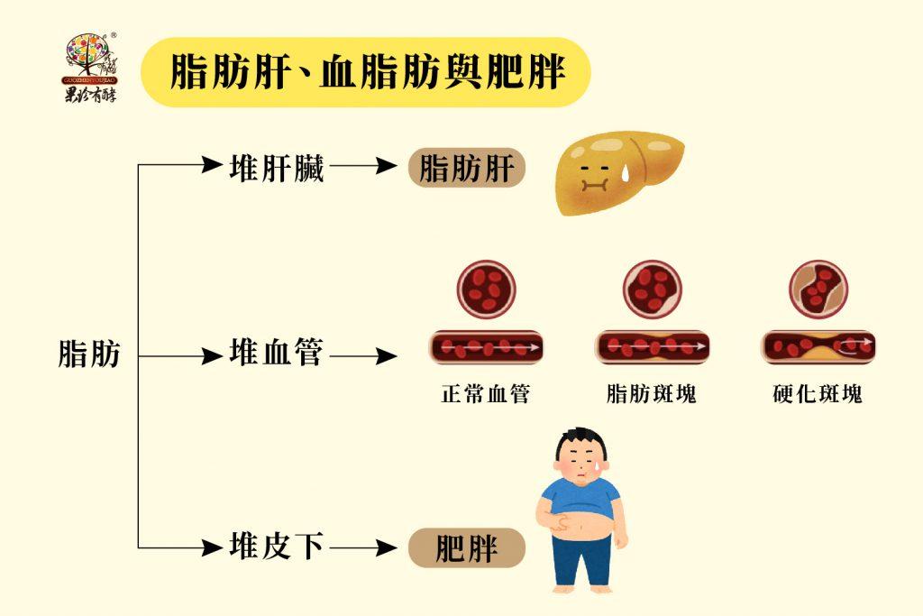 脂肪肝、血脂肪與肥胖