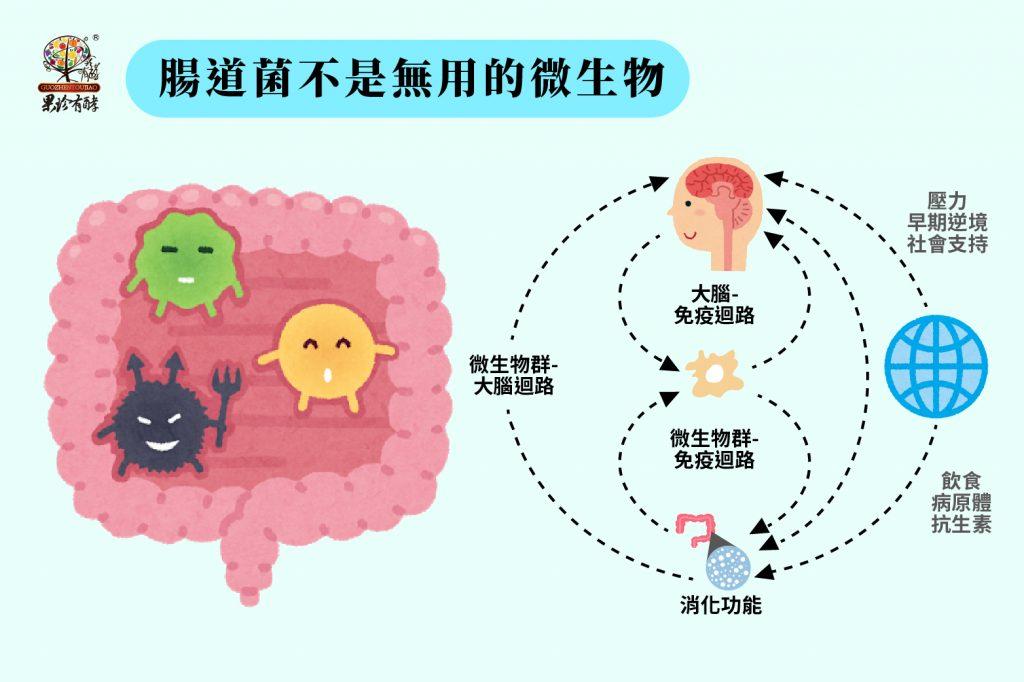 腸道菌不是無用的微生物
