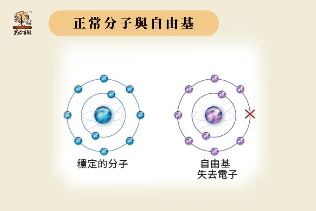 正常分子與自由基