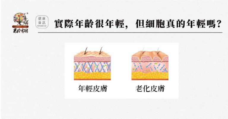 端粒 端粒酶 老化